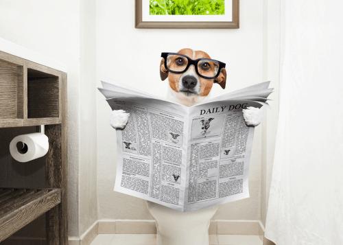 מנטרל ריחות שתן של כלבים