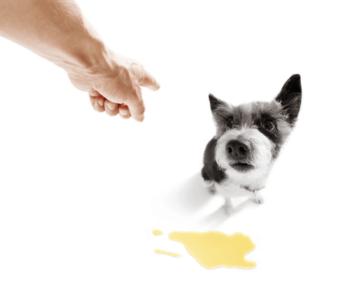 מנטרל ריחות שתן כלבים