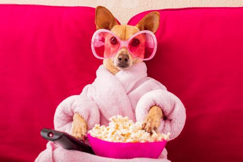 איך מנטרלים ריח שתן של כלב